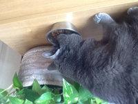 Wazir Cat Bowl Stainless Steel 4-pk. uploaded by Maryann A.