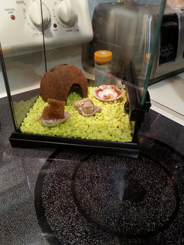 PetProductsPlanet Florida Marine Research SFM20200 6-Pack Coconut Hermit Crab Hideaway uploaded by Holly  M.