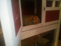 Advantek The Stilt House Rabbit Hutch uploaded by Charnita F.