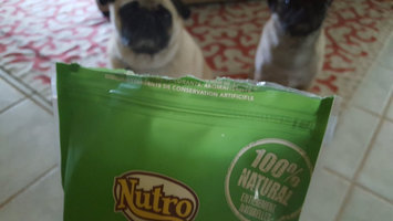 Photo of Nutro™ Crunchy Treats with Real Apple 10 oz. Bag uploaded by Sara S.