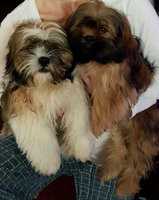 Hartz Mountain 97928 Groomer's Best Oatmeal Dog Shampoo uploaded by Susan F.