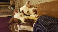 Nylabone Long Lasting Durable Chew uploaded by Candice C.