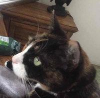 Cat Lady Box uploaded by Tonantzin H.