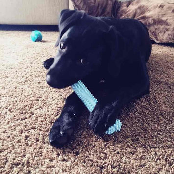 Photo of NylaboneA Puppy Chew Dental Dog Bone uploaded by Hannah A.