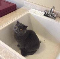 Whiskas Temptations Savory Salmon Flavor Cat Treats uploaded by Mar B.