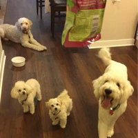 WellnessA Petite Treats Small Breed Dog Treat uploaded by Payton L.