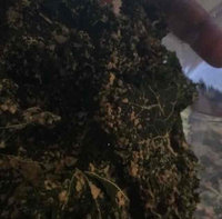 ChocolaTree Kale Chips - Raw (3 Oz.) - Vegan Cheddar uploaded by Christy R.