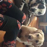 Flex Aid Elastic Knee Stabilizer uploaded by Jessica S.