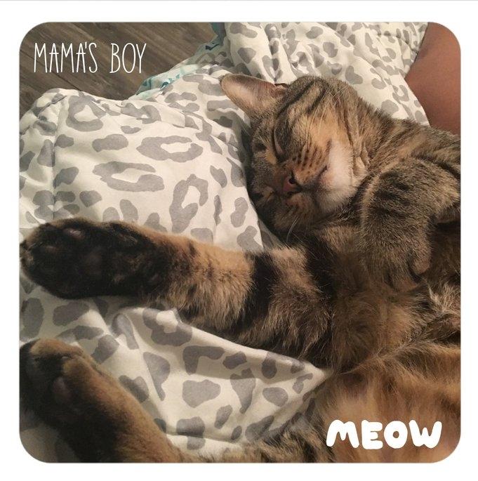Purina ONE Urinary Tract Health Formula Adult Premium Cat Food 7 lb. Bag uploaded by Jasmine G.
