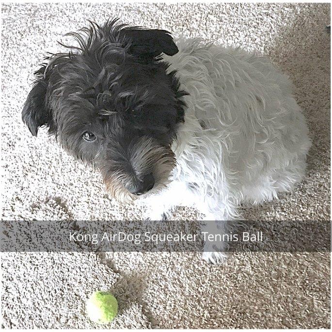 KONG AirDog Squeaker Tennis Ball uploaded by Becky P.