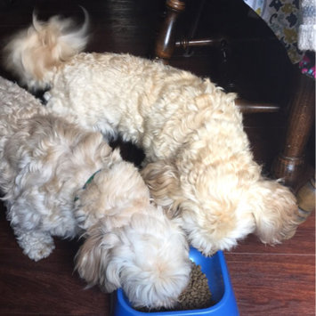 Photo of Diamond Pet Foods Diamond Naturals Small Breed Adult - Chicken & Rice uploaded by Emily O.