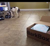 BarkBox uploaded by Taylor M.