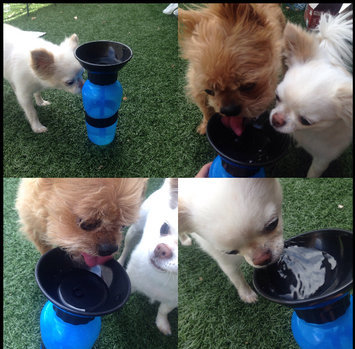 Photo of Aqua Dog Travel Water Bowl Bottle in Aqua uploaded by Cristina V.