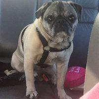 Majestic Pet Products, Inc. Majestic Pet Adjustable Nylon Dog Harness - Black Medium uploaded by Cassidy B.
