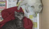 Fancy Feast® Gourmet Wet Kitten Food With Tender Turkey uploaded by Nicole O.