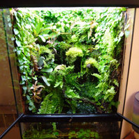 Zilla 11421 6-Inch Desert Series Terrarium Plant, Star Stern Succulent uploaded by Intan H.