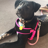 Four Paws Comfort Control Harness Blue Large uploaded by Tiffany K.
