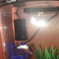 Top Fin® Betta Aquarium Heater size: 20W uploaded by Zana S.
