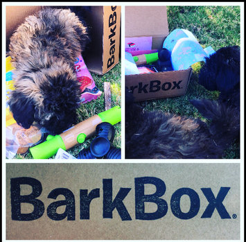 BarkBox uploaded by Katherine V.