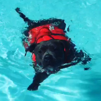 Photo of Outward Hound Dog Lifejacket uploaded by Angela S.