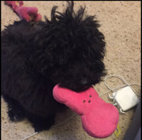 Peeps® Bunny Dog Toy - Squeaker uploaded by Katherine V.