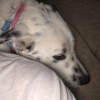 Adams Flea and Tick Collar for Dogs uploaded by Farrah J.