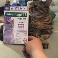 Advantage II for Cats 6 Month Supply Over 9lb uploaded by Erin G.