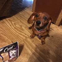 CESAR® Dry Filet Mignon Flavor with Spring Vegetables - Dry Dog Food uploaded by Amber L.