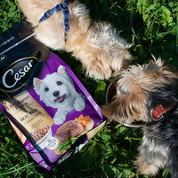 CESAR® Dry Filet Mignon Flavor with Spring Vegetables - Dry Dog Food uploaded by Alessa P.