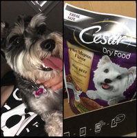 CESAR® Dry Filet Mignon Flavor with Spring Vegetables - Dry Dog Food uploaded by Andrea A.