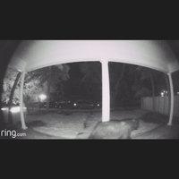 Video Doorbell Pro uploaded by Jen S.