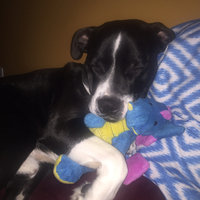 Top Pawtrade; Tuff Chewguard Dragon Dog Toy - Squeaker uploaded by Ali B.