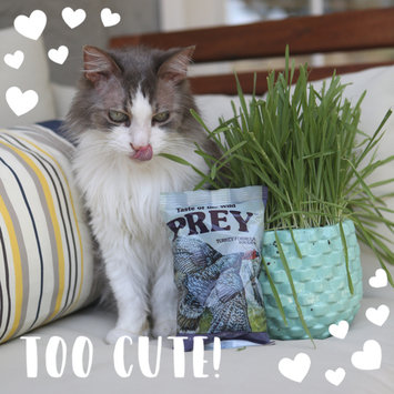 Photo of Taste of the Wild PREY Turkey Formula for Cats uploaded by Stephanie T.
