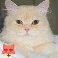 Friskies Party Mix Cat Treats Original Crunch: Chicker Liver & Turkey uploaded by Aisha I.