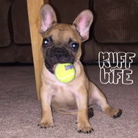 Kong Squeaker Tennis Balls - X-Small 3 pack uploaded by Jessica P.