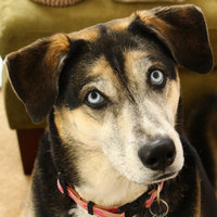 PURINA ONE® True Instinct Turkey & Venison Dog Food uploaded by Jen C.