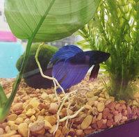 Mars Fishcare North America Leaf Zone Aquarium Plant Food uploaded by Ariel T.