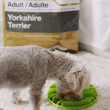 Photo of Royal Canin® Yorkshire Terrier 28™ Adult Dog Food 10 lb. Bag uploaded by Kara D.
