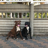 Pedigree® Adult Complete Nutrition Dry Dog Food 50 lb. Bag uploaded by Monique R.