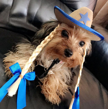 Photo of Rubie's Witch Hat Hair Pet Costume - S/M uploaded by Maya S.