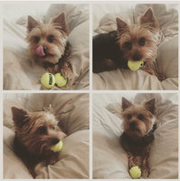 Kong Squeaker Tennis Balls - X-Small 3 pack uploaded by Chessney R.