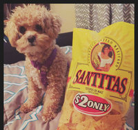 Santitas White Corn Blend Tortilla Chips uploaded by Shelby A.
