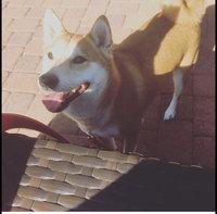 K9 AdvantixA II Flea & Tick Dog Treatment uploaded by Lila O.