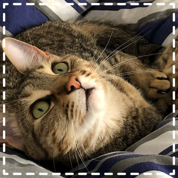 Photo uploaded to #CatLove by Jill H.