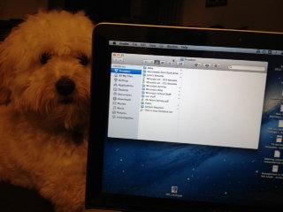 Photo of Dropbox uploaded by Miranda L.