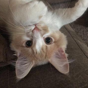 Photo of Iams™ Proactive Health™ Healthy Kitten Cat Food uploaded by Ayasha K.