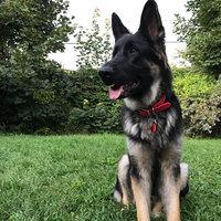 Royal CaninA German Shepherd Adult Dog Food uploaded by Kelsey B.