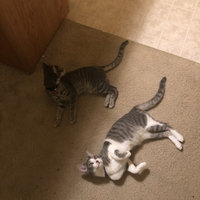 Friskies® Savory Shreds Turkey and Giblets Wet Cat Food uploaded by Heather A.