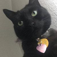 WellnessA Senior Cat Food uploaded by Ashley B.