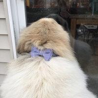 Martha Stewart PetsA Houndstooth Bow Dog Collar uploaded by Gabrielle W.